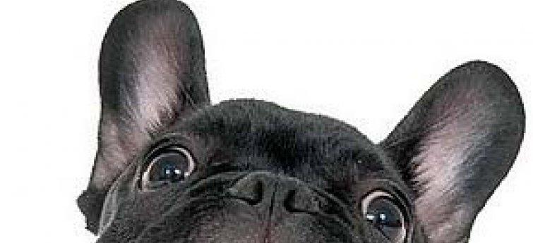 10 belangrijke tips bij het kiezen van je hond