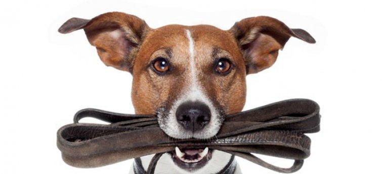 Hond met leiband