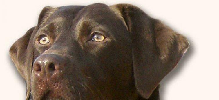 5 tips voor het welzijn van je hond