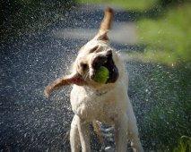 6 Lente activiteiten waar je hond van zal houden