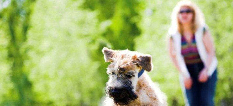 6 snelle activiteiten voor jou en je hond