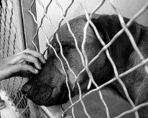 Adoptie: Wat mag je verwachten wanneer je een hond adopteert?