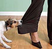 Agressie bij honden : stop bijten en happen