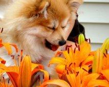 Allergieën bij honden