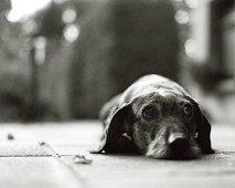 Als je hond niet alleen durft te zijn