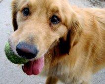 Alternatieve geneeskunde voor je hond?