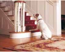 Artritis of gewrichtsontsteking bij je hond