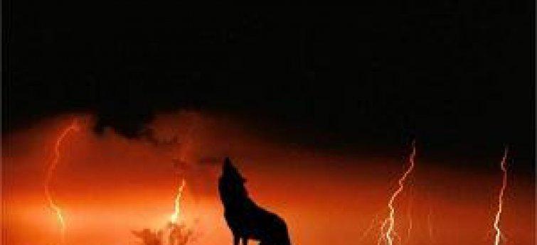Bang voor de donder: hoe help je je hond van zijn angst af?