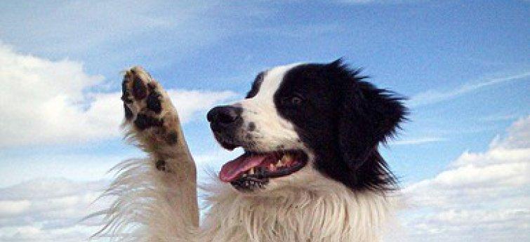 Bepaald het ras van je hond echt zijn gedrag