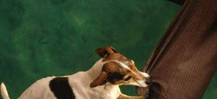 Bijtende hond - Hondenbeten vermijden