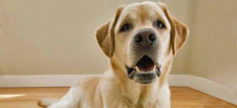 Commerciële of zelfgemaakte hondenvoeding? Discussieer mee!