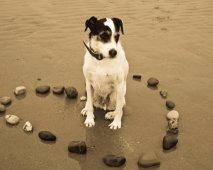 Congestief hartfalen bij honden