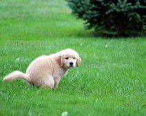 Darmziekten bij honden