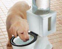 De 3 ergerlijkste hondenstreken en hoe ze te stoppen