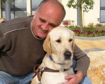 De Labrador Retriever als hulphond of blindengeleidehond