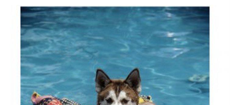 De baasjes op vakantie, de hond in het hondenpension
