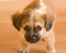 De belangrijkste benodigdheden bij de aankoop van een hond