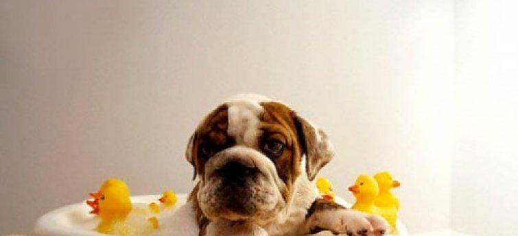 De hygiëne van een hond