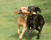 De juiste hondenfokker kiezen: enkele tips