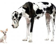De juiste hond kiezen