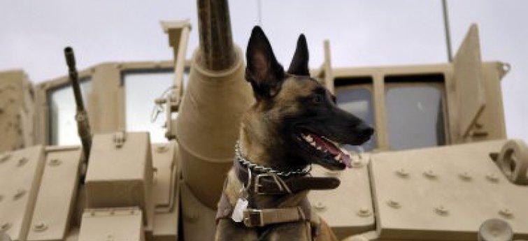 De legerhonden van de Verenigde Staten