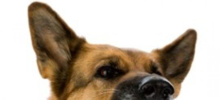 De lichaamstaal van je hond begrijpen