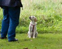 De makkelijkste manier om je puppy te trainen