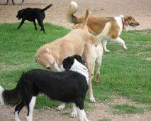 De ongeschreven regels in het hondenpark