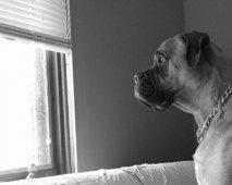 De snelste weg om je hond van zijn verlatingsangst af te helpen