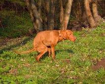 Diarree bij honden