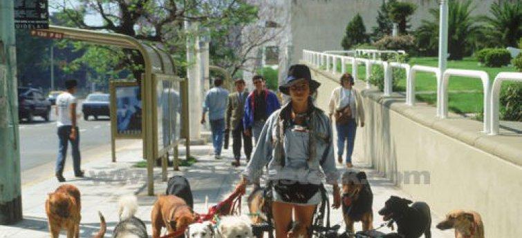 Dogsitter gezocht