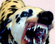 Dominante agressie bij je hond