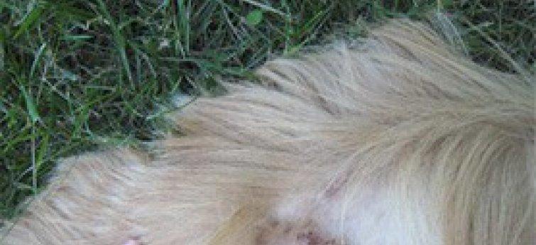 Droge huid bij je hond?