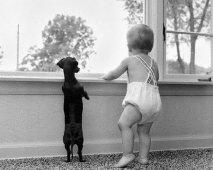 Een baby op komst! Wat met de hond?