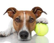 Een betere hond door sterilisatie?