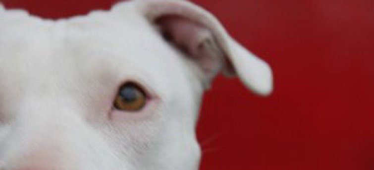 Een dove hond, waar moet je rekening mee houden?