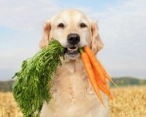 Een gezonde en blije hond