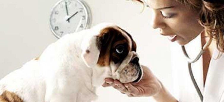 Een goede dierenarts voor je hond