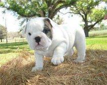 Een goede puppy vind je bij een goede fokker