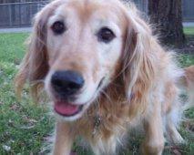 Een goede verzorging is voor uw hond van groot belang