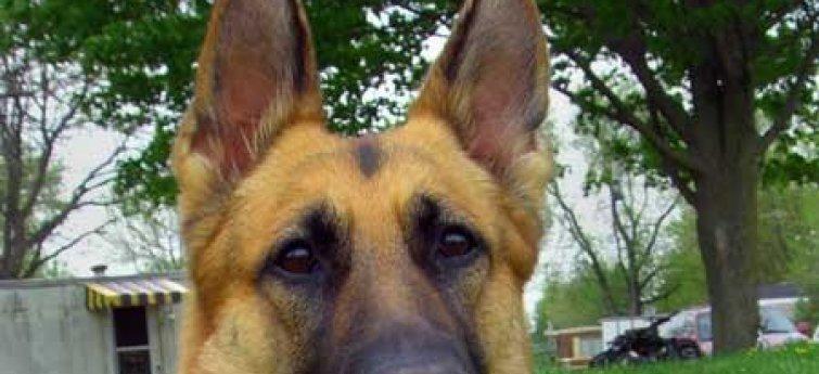 Een greep uit de populairste hondenrassen