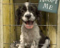 Een hond adopteren