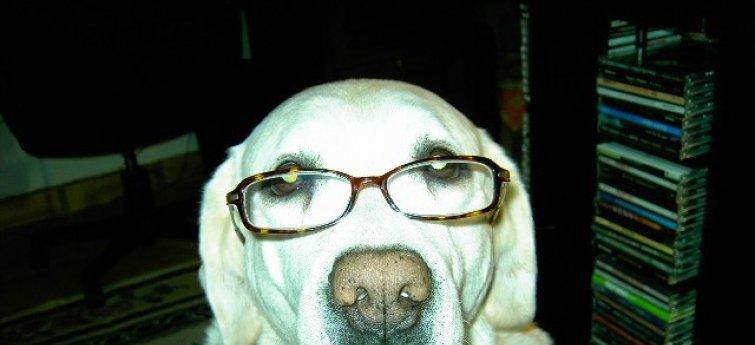 Een oudere hond, hoe verzorg je hem?