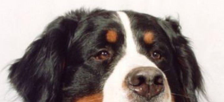 Een rasclub: iets voor jou en je hond?