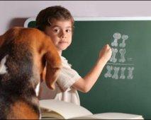 Een spreekbeurt over de hond?