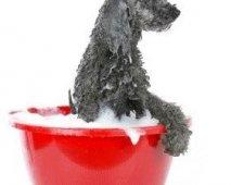Een verzorgingshandeling voor je hond