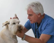 Enkele basistips om je hond goed te verzorgen