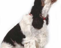 Enkele gouden tips om je hond te doen stoppen met blaffen