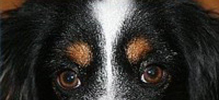 Essentiële vetzuren voor honden