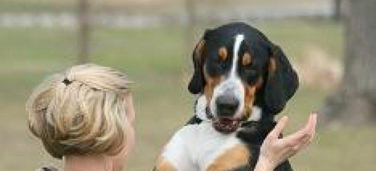 Gedragsproblemen bij honden